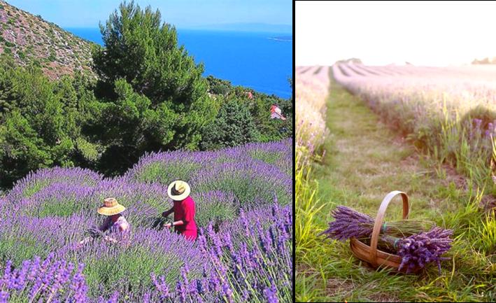 Z dovolenkového zápisníka… Chorvátsko – deň druhý