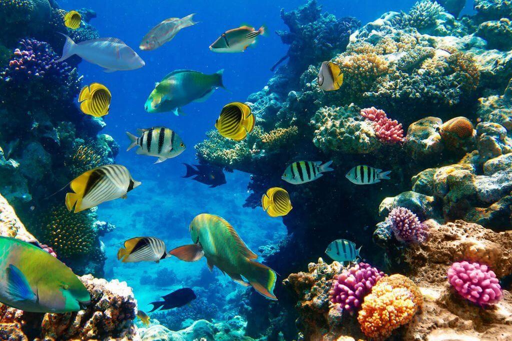 dovolenka lido di jesolo čo vidieť podmorský svet